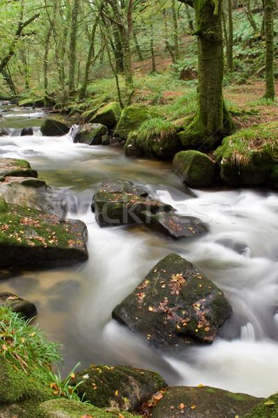 Vadvízi körül folyó erdő víz zöld Stock fotó © bobhackett