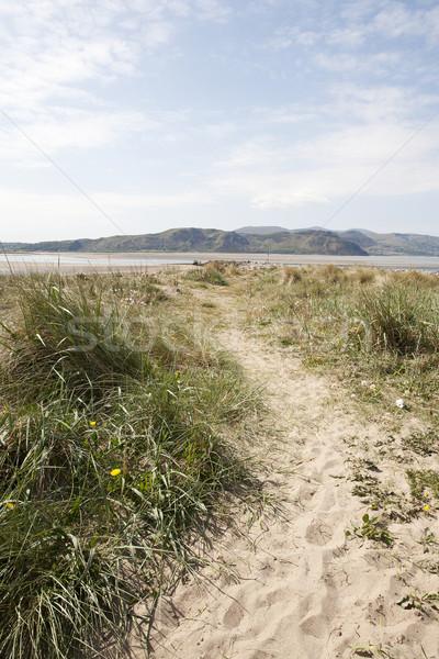 Tengerpart út fű homokos tengerpart Stock fotó © bobhackett