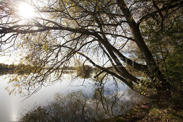 Stok fotoğraf: Sonbahar · güneş · ağaç · küçük · göl