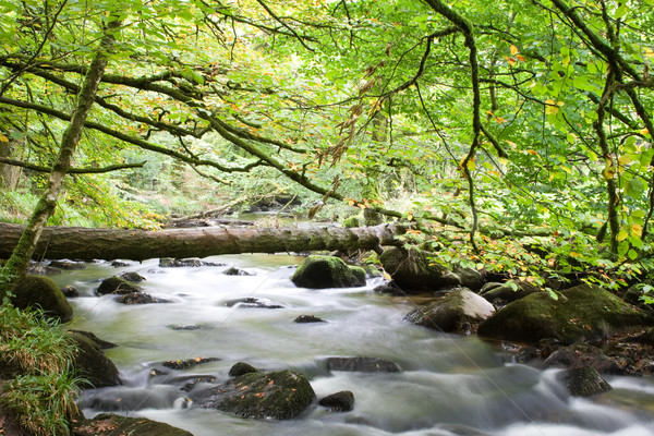 Brug stream bos groene waterval rivier Stockfoto © bobhackett