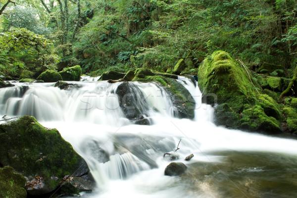 Folyik víz erdő zöld vízesés folyó Stock fotó © bobhackett
