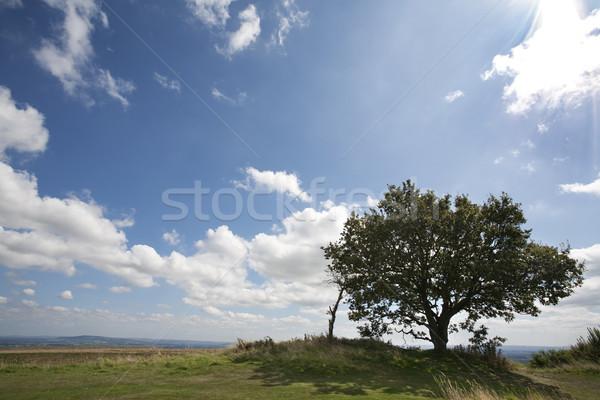 Egyedüli fa növekvő sziluett kék ég fehér Stock fotó © bobhackett