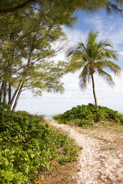 út tengerpart homokos pálmafák tenger Stock fotó © bobhackett