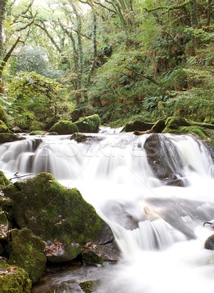 Rivière eau automne forêt vert cascade Photo stock © bobhackett