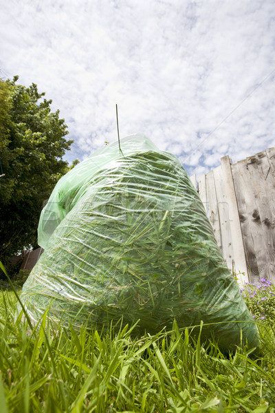 Vert déchets sac herbe permanent pelouse Photo stock © bobhackett