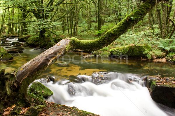 Fa vízesés dől folyó erdő zöld Stock fotó © bobhackett
