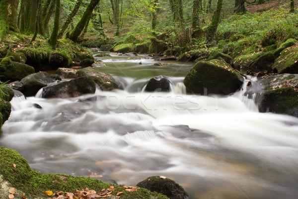 Folyó vízesés vadvízi kövek erdő zöld Stock fotó © bobhackett