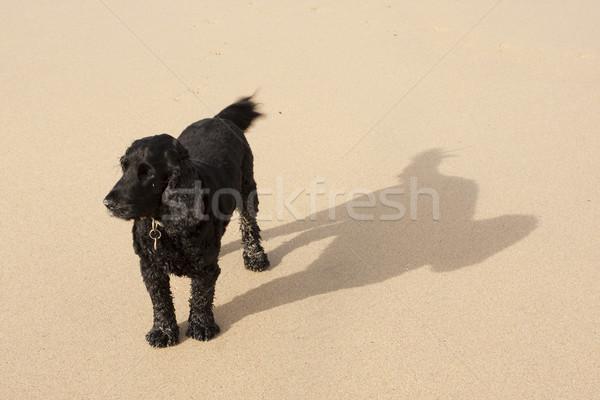 árnyék kutya nagy homokos tengerpart Stock fotó © bobhackett