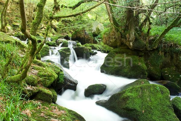 Nehir su yeşil çağlayan bitkiler beyaz Stok fotoğraf © bobhackett