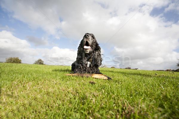 Fekete kutya bot pihen fű égbolt Stock fotó © bobhackett