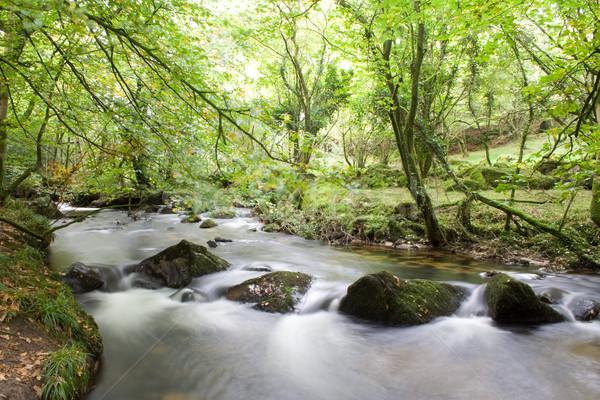 Folyó nagy folyam erdő zöld vízesés Stock fotó © bobhackett