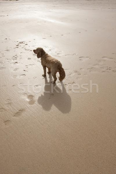 Kutya tengerpart nagy árnyék homokos tengerpart Stock fotó © bobhackett