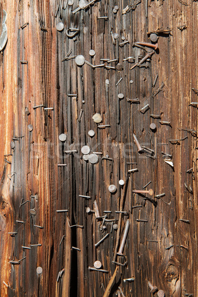 Utility Pole nails vertical Stock photo © bobkeenan