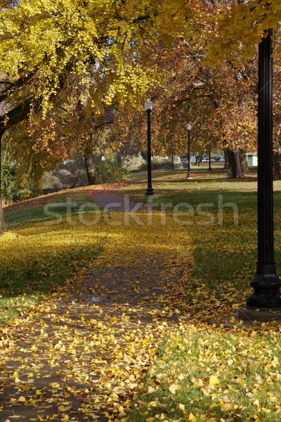 Stad park pad najaar Geel bladeren Stockfoto © bobkeenan