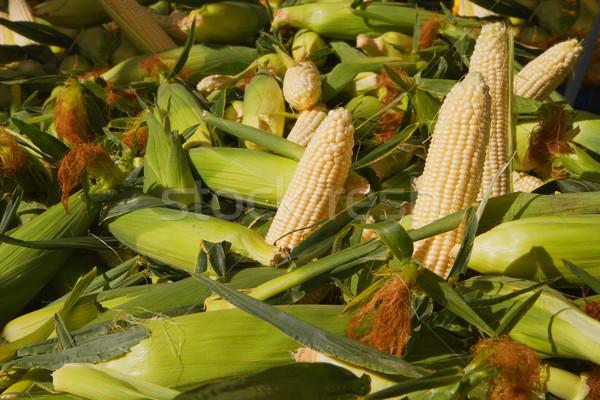 Shucked Corn Stock photo © bobkeenan