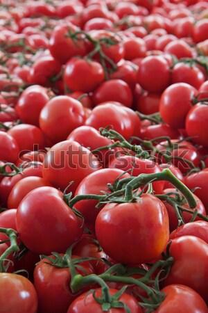 つる トマト ビッグ 赤 緑 ストックフォト © bobkeenan