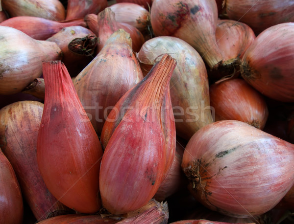 Boeren markt voedsel landbouw plantaardige Stockfoto © bobkeenan