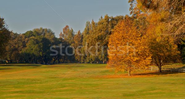 Golfbaan twee goud blad bomen Stockfoto © bobkeenan