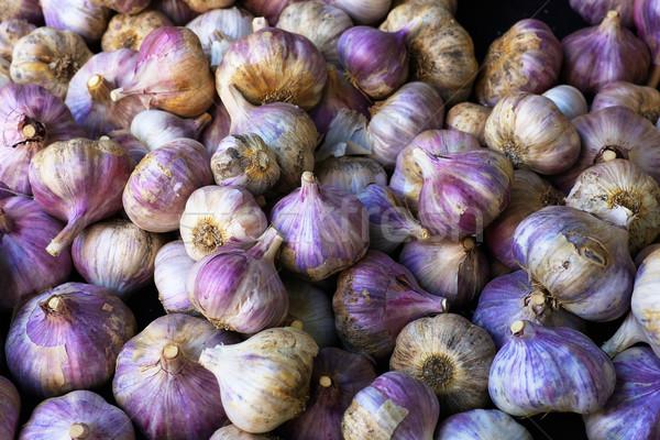 Purple Italian Garlic Stock photo © bobkeenan