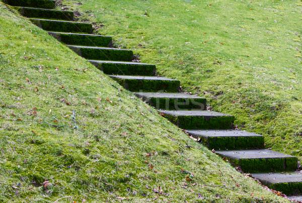 Diyagonal beton adımlar tepe çim kış Stok fotoğraf © bobkeenan