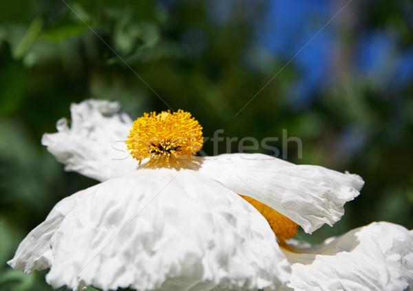 Oeuf fleur peu profond or centre Photo stock © bobkeenan
