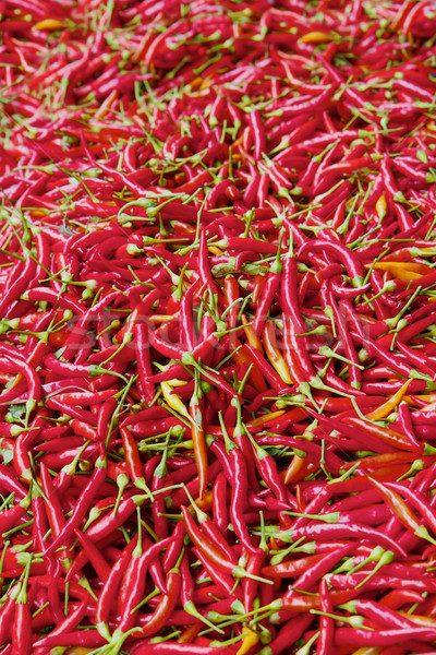 Thousands of Red peppers Stock photo © bobkeenan