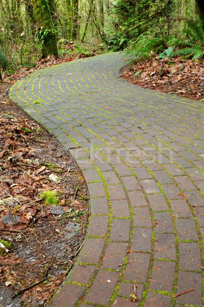 Foto stock: Tijolo · caminho · textura · floresta · fundo · verde