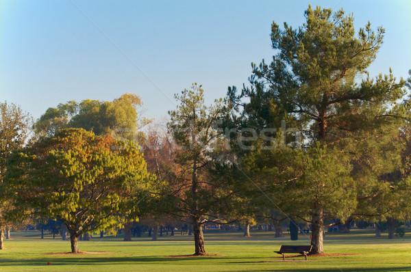Campo de golfe madeira banco de manhã cedo árvores Foto stock © bobkeenan