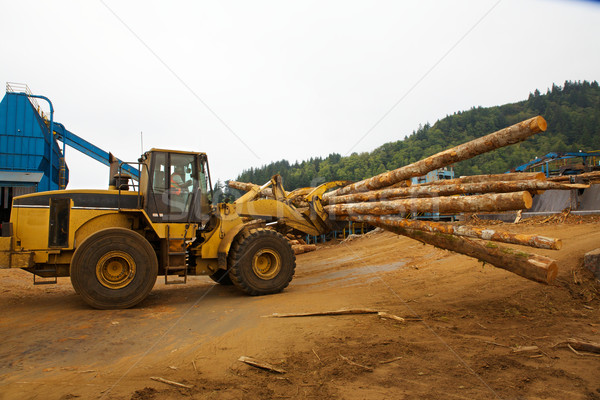 Logging Stock photo © bobkeenan