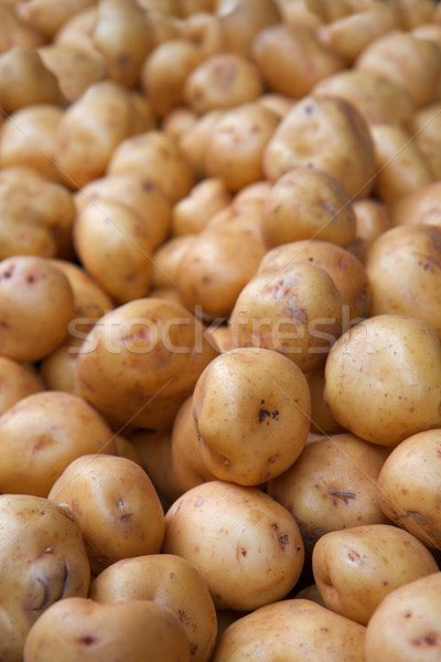 white potatoes Stock photo © bobkeenan