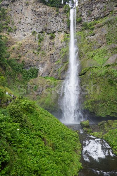 Lang dun water vallen mos Stockfoto © bobkeenan