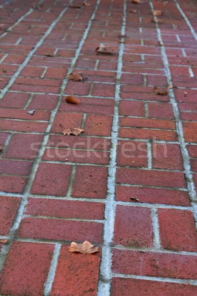 canted brick walkway Stock photo © bobkeenan