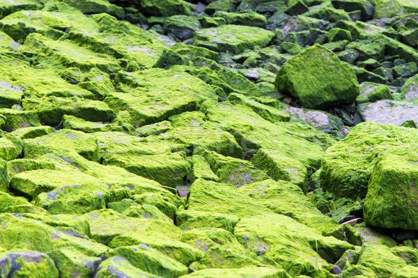 Stock photo: Moss covered rocks 2
