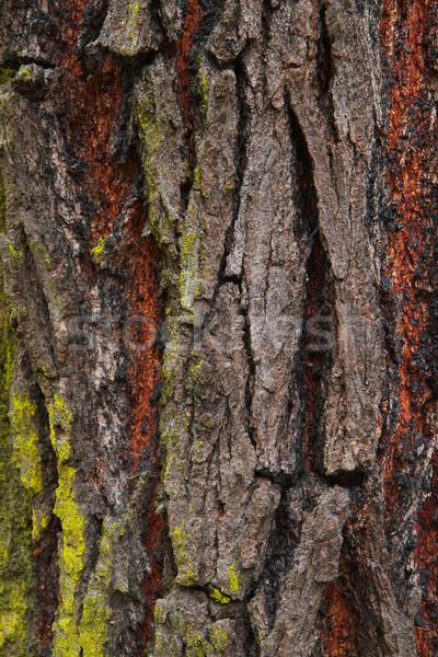 Foto d'archivio: Corteccia · verde · muschio · grigio