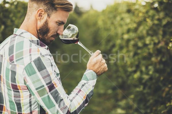 Jungen Verkostung Rotwein Weinberg Wein Sommer Stock foto © boggy