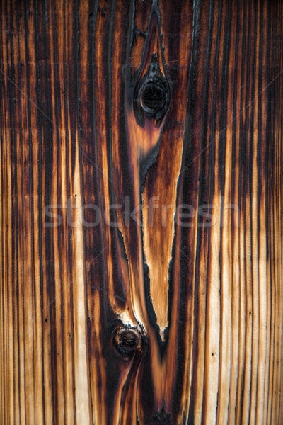 Textura ver árvore parede Foto stock © boggy