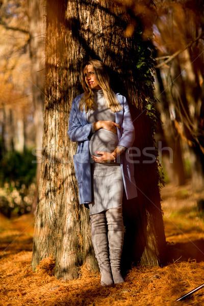 Stockfoto: Zwangere · vrouw · poseren · park · najaar · bos · natuur
