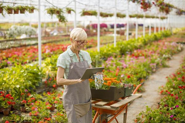 Portrait of senior woman using tablet in flower garden Stock photo © boggy