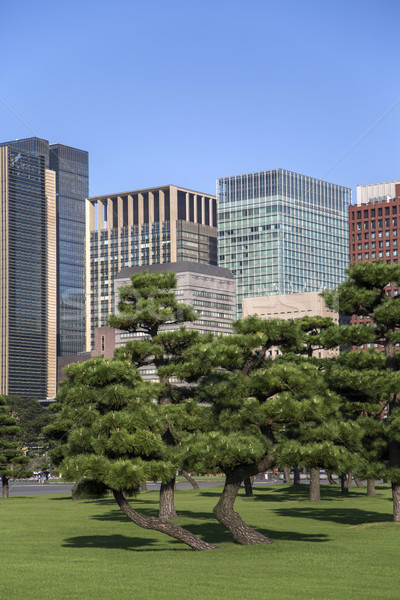 Mooie groene park tuin Japan Stockfoto © boggy