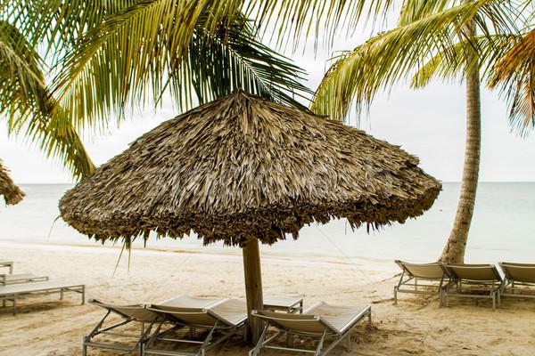 Praia tropical árvore sol natureza verão verde Foto stock © boggy