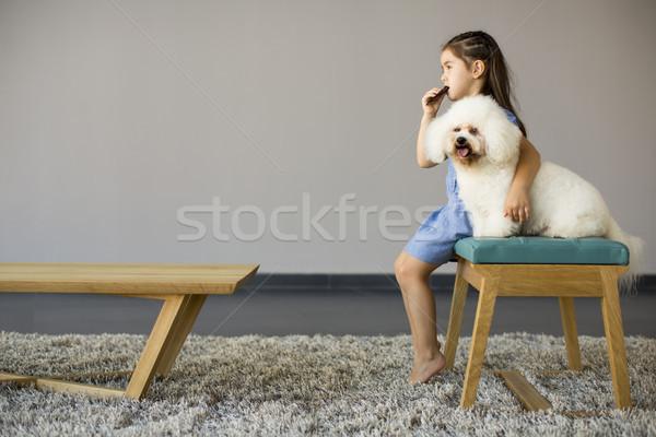 女の子 演奏 白 プードル ルーム 犬 ストックフォト © boggy