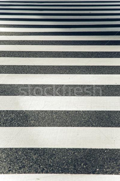 シマウマ 表示 市 通り クロス ストックフォト © boggy