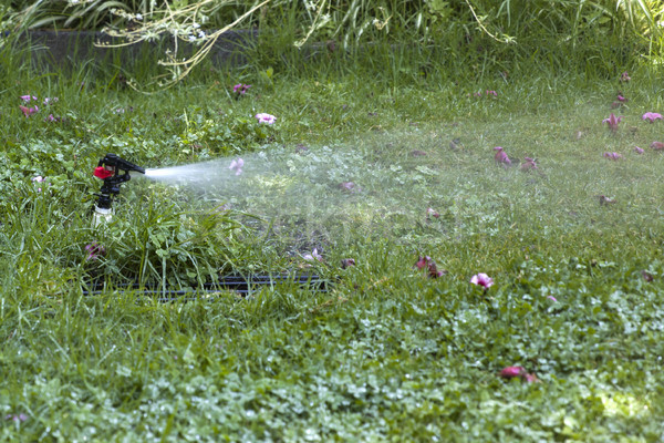 Water sprinkler in the garden Stock photo © boggy