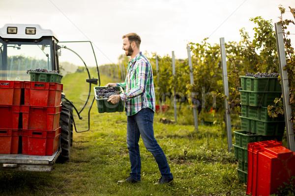 Joven cosecha vina vista alimentos Foto stock © boggy