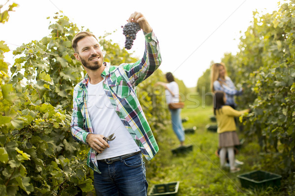 Young man in the vineyard Stock photo © boggy