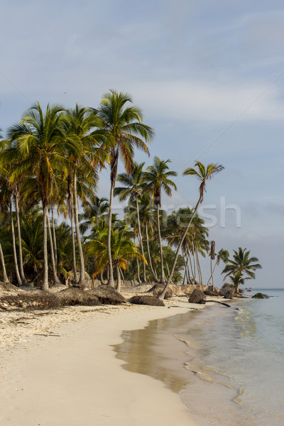 Tropical beach Stock photo © boggy