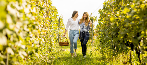 Two young girls picking grapes in the vineyard Stock photo © boggy