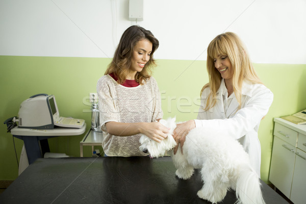 Cute white dog at veterinarian Stock photo © boggy