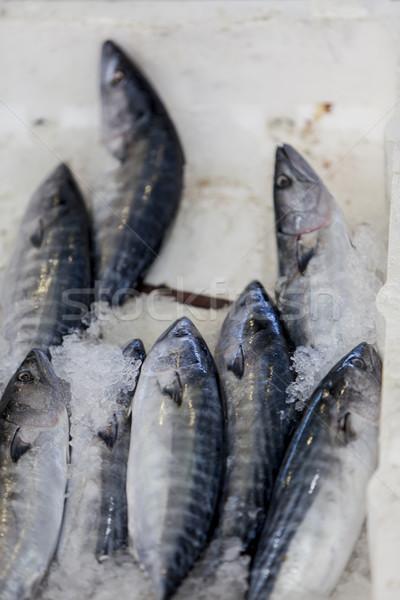 Fresche frutti di mare pesce gruppo morti agricoltura Foto d'archivio © boggy