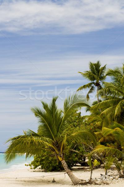 Praia tropical céu água mar verão palma Foto stock © boggy